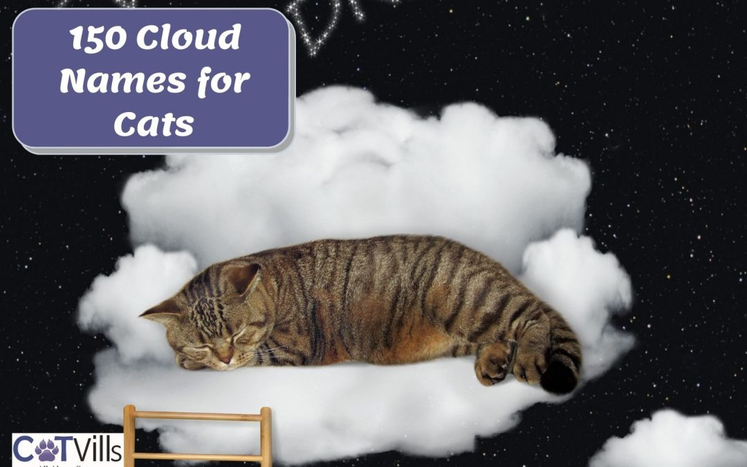 150 Extremely Beautiful Cloud Names for Cats