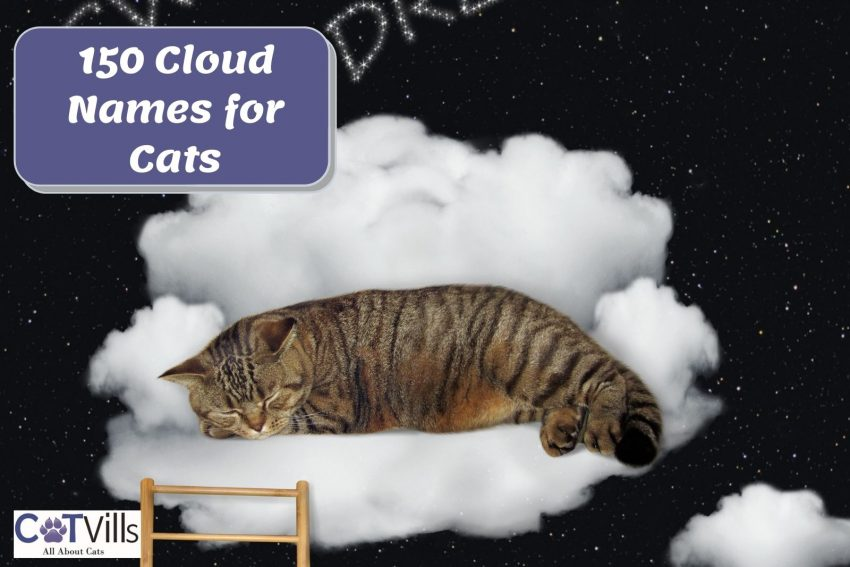 """cat sleeping on the clouds with """"150 Cloud Names for Cats"""" signage beside him"""