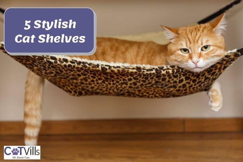 a tabby orange cat relaxing on his animal printed hammock