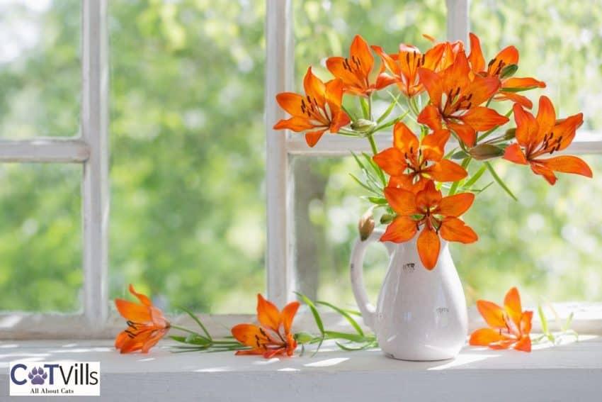orange lilies on a white flower pot