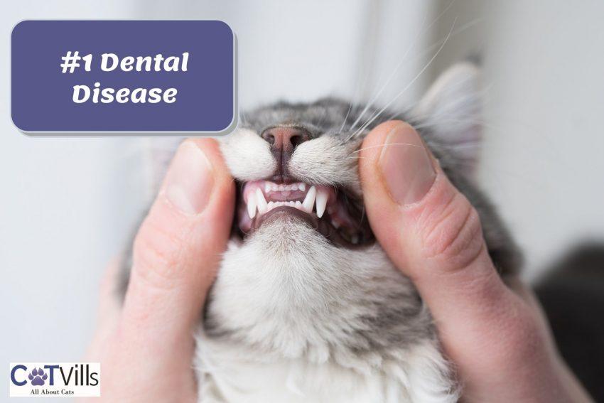 man checking his cat's teeth