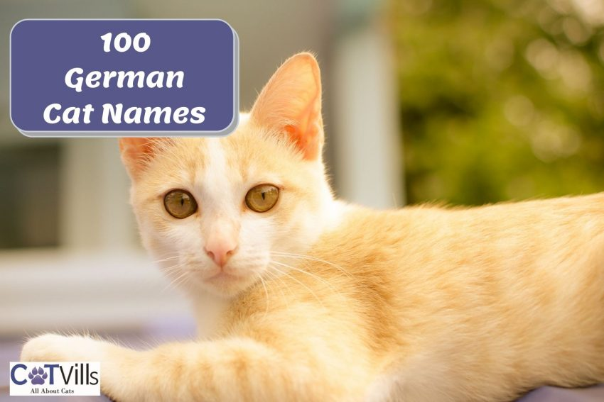 a well-behaved ginger cat with a German cat name