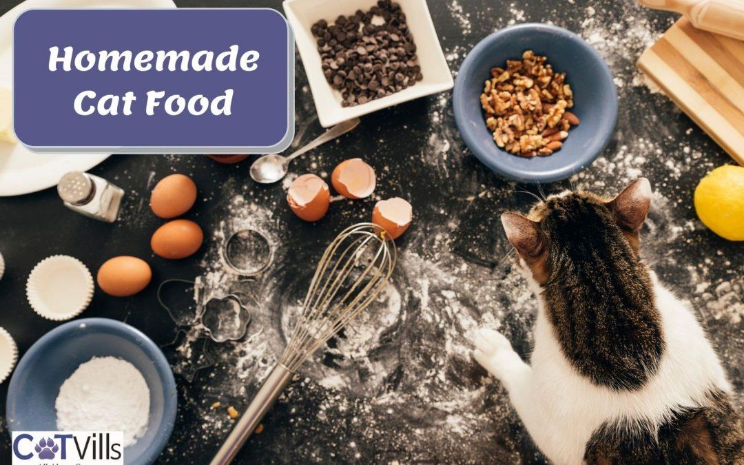 Homemade Cat Food (Benefits, Risks, and Recipes]