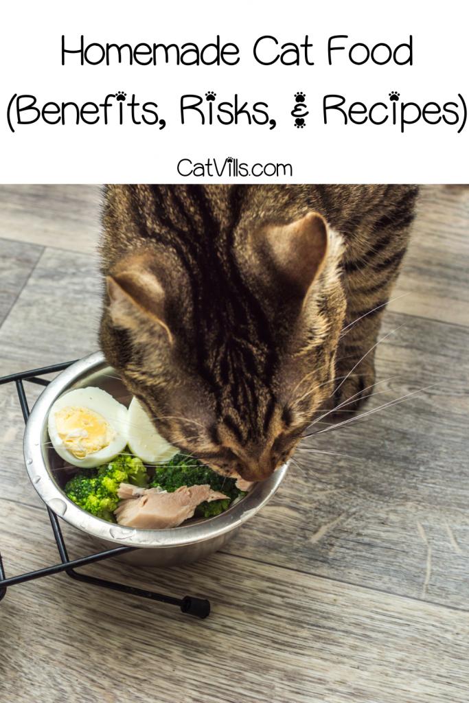 tiger cat eating his Homemade Cat Food