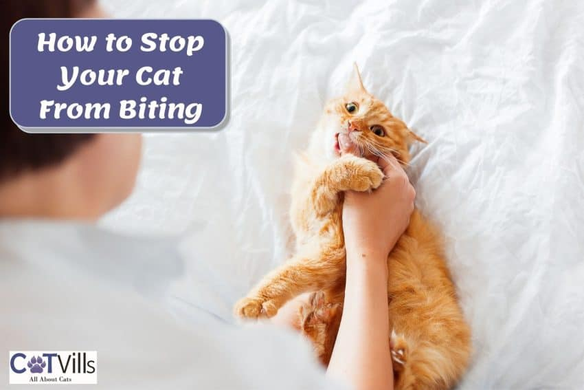 orange cat biting her owner's hand. how to stop your cat from biting