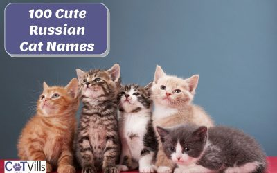 100 Cute Russian Cat Names for Your New Kitten