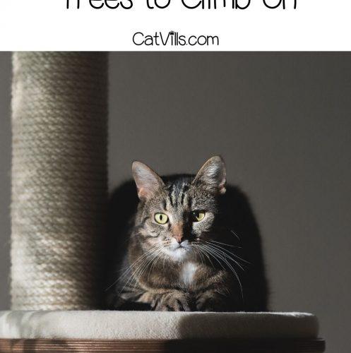 tiger cat sitting on a tall corner cat tree