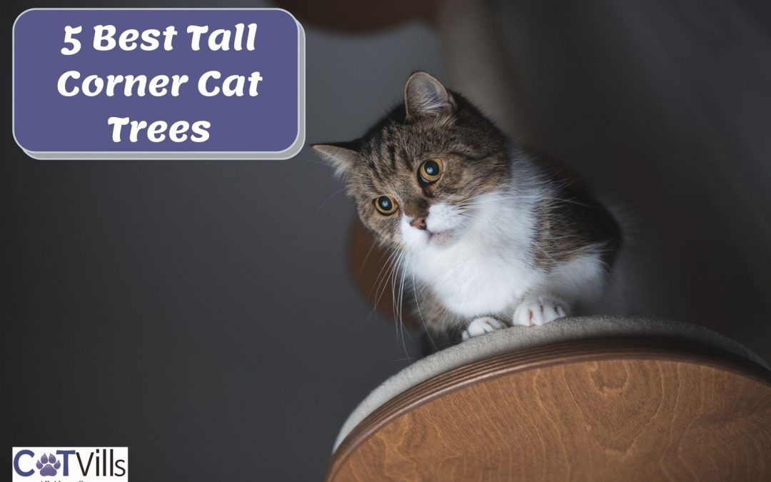 Tall Corner Cat Trees: 5 Best Choices in 2021