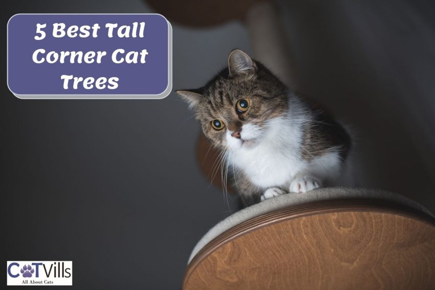 cat on top of a tall corner cat tree