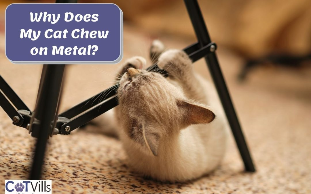 5 Reasons Why Cats Chew on Metal (+ 6 Ways to Prevent it)