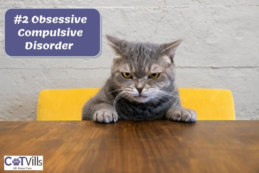 an angry cat sitting on a yellow chair