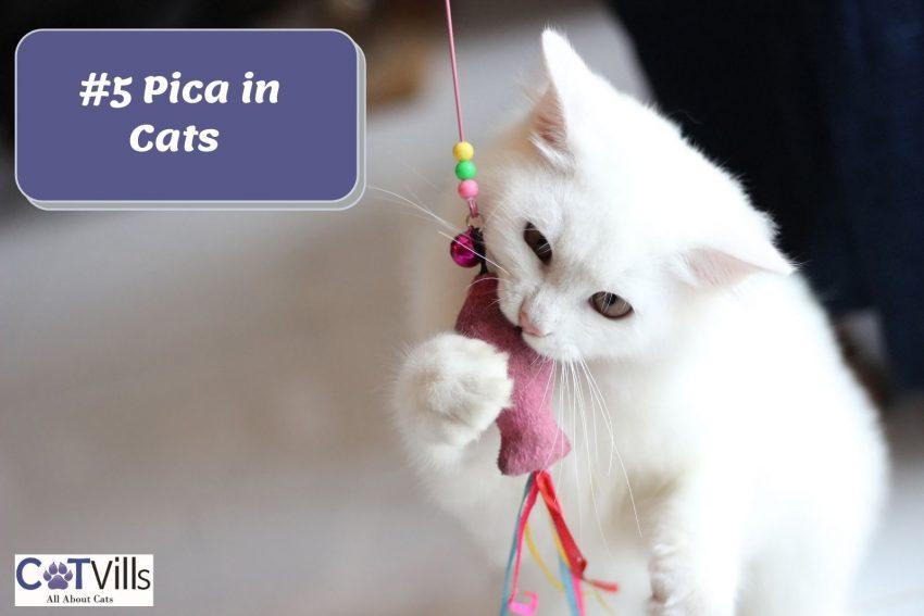 white cat biting his catnip toy