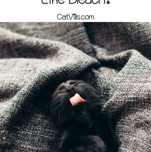 black cat licking his lips while lying on a gray blanket