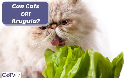 Is Arugula Safe for Cats? Is it a Healthy Treat?