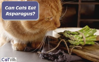 Can Cats Eat Asparagus? (is it Harmful To Them?)