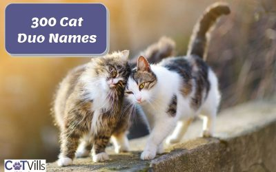 300 Appealing Cat Duo Names for Males & Females
