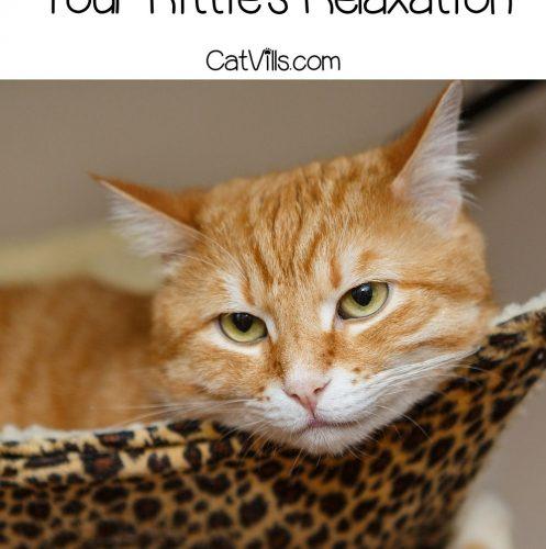 orange tabby cat resting on a hammock