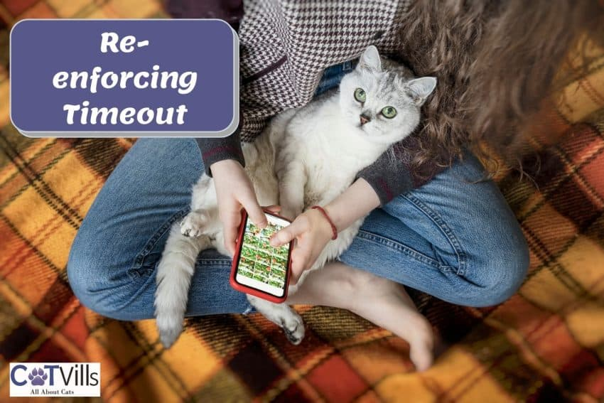 cat sitting on a lady's lap while she is playing games on her phone