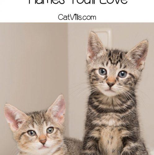 two kittens with Irish cat names