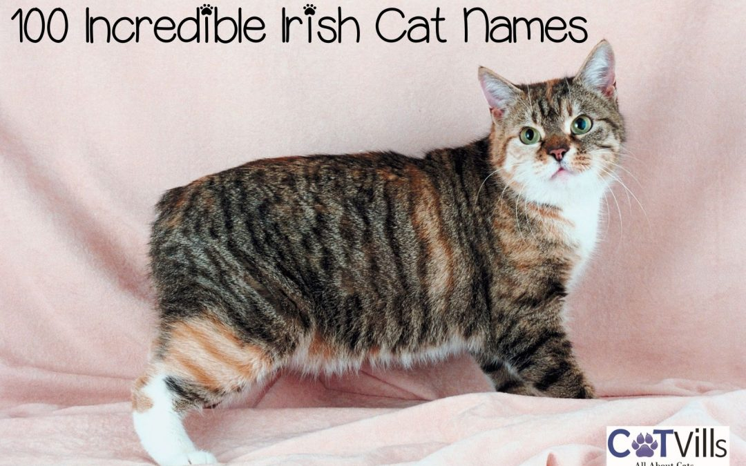 100 Incredible Irish Cat Names for Your Sweet Lad or Lass