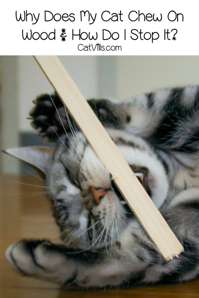 cat chewing on wood