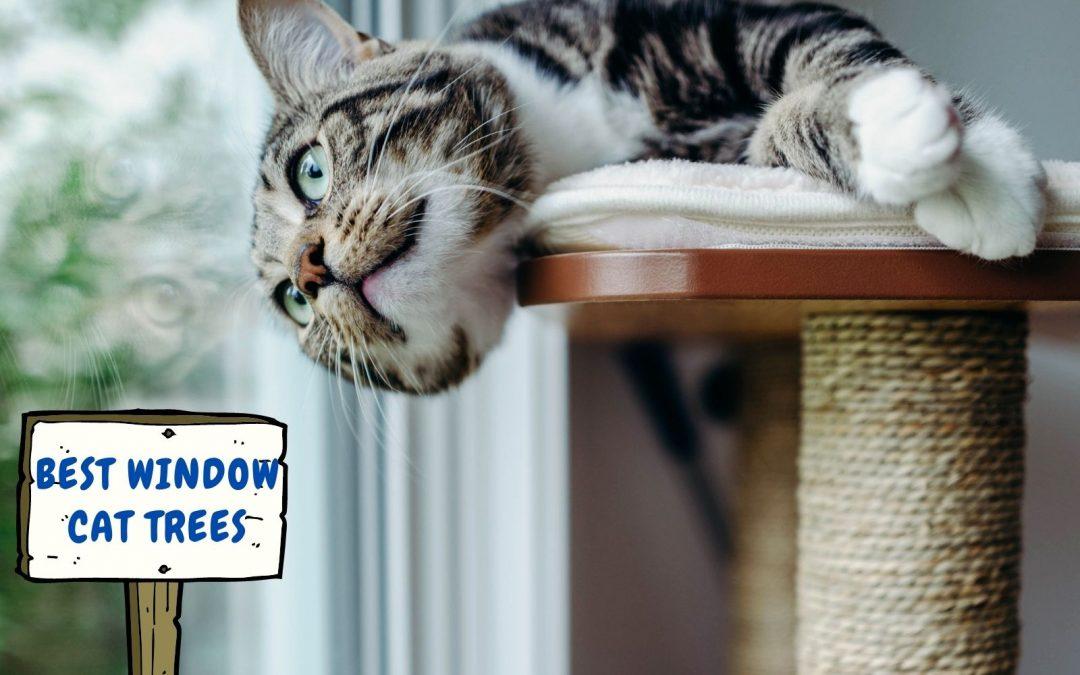 5 Adorable Window Cat Trees in 2021
