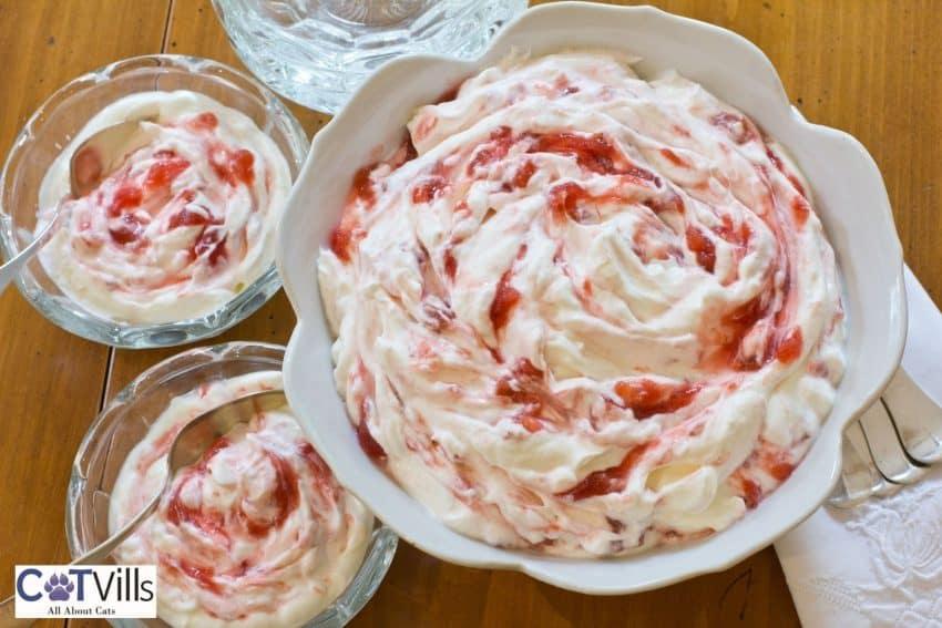 yummy rhubarb yogurt: can cats eat rhubarb yogurt?