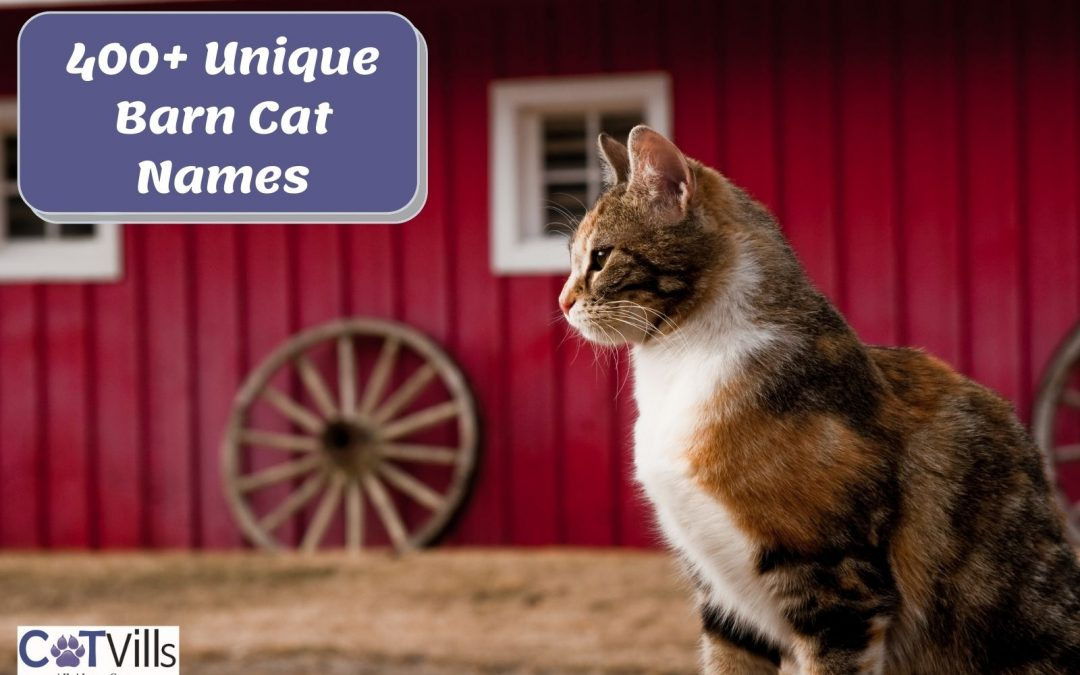 400+ Best Barn Cat Names That Are Oh-So Adorable