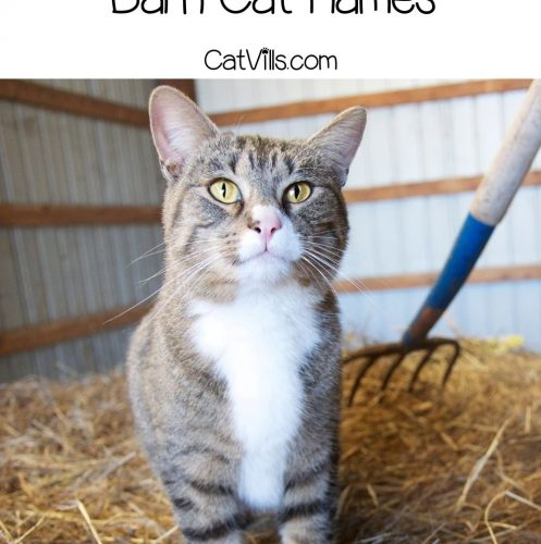 a very adorable tiger cat in the barn
