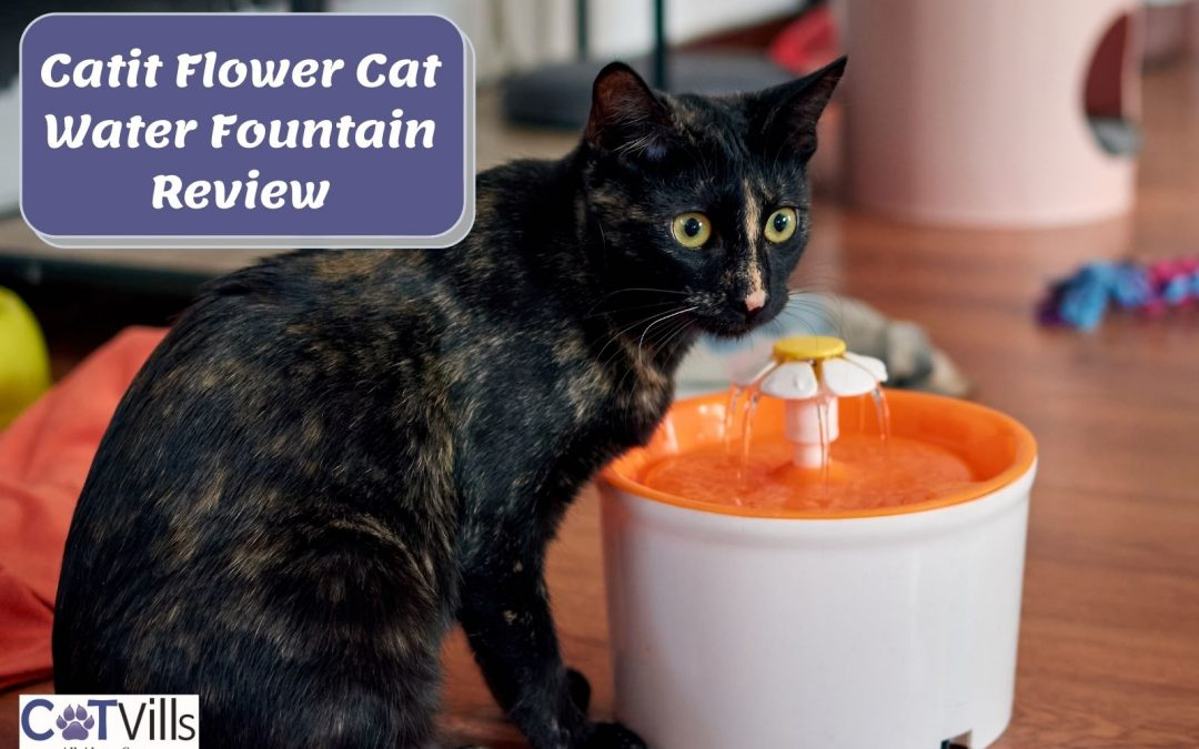 My Honest Review of Catit Flower Cat Water Fountain (2021)