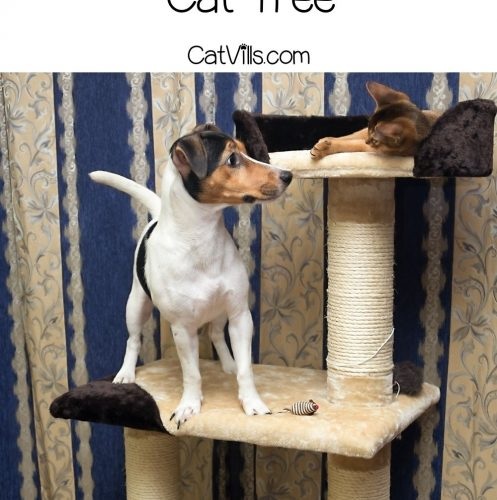 dog and cat playing on the DIY cat tree