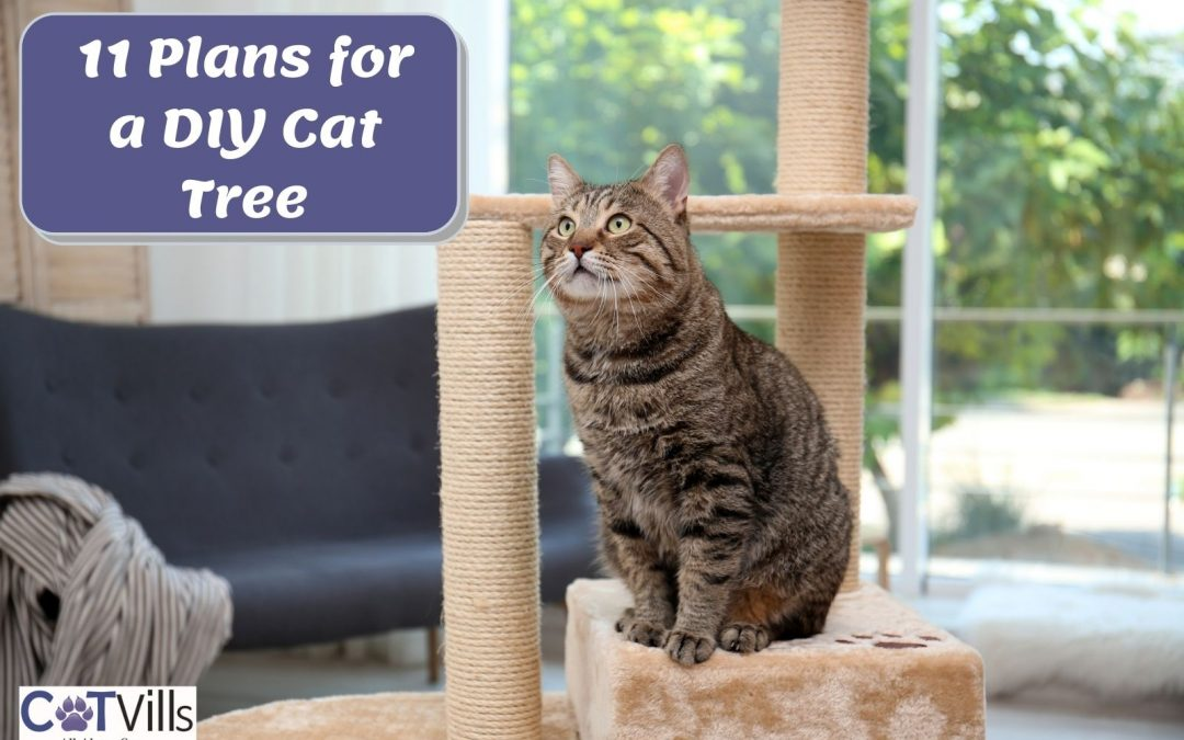 11 Cool Plans for a DIY Cat Tree