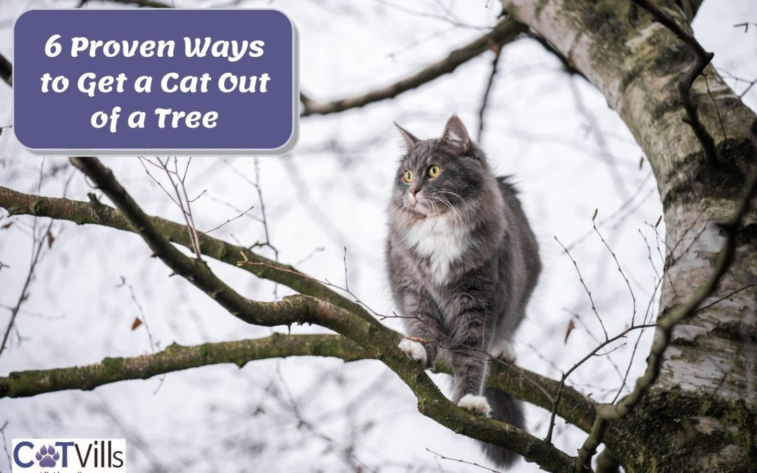 6 Proven Ways to Get a Cat Out of a Tree
