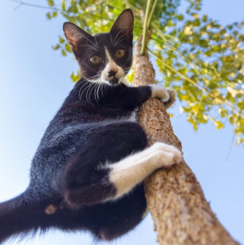 black and white cat climbing a tall tree