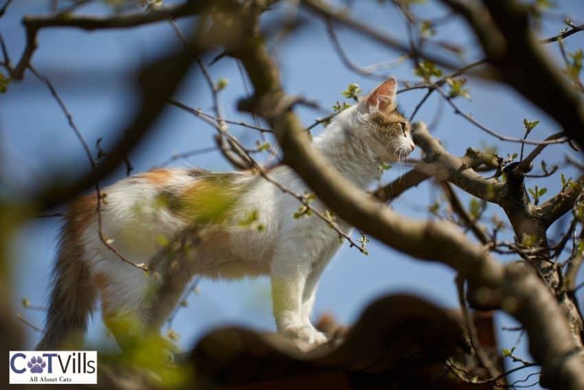 cat stuck in a tall tree