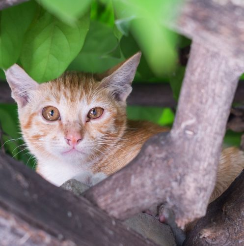 sad ginger cat stuck in a tall tree
