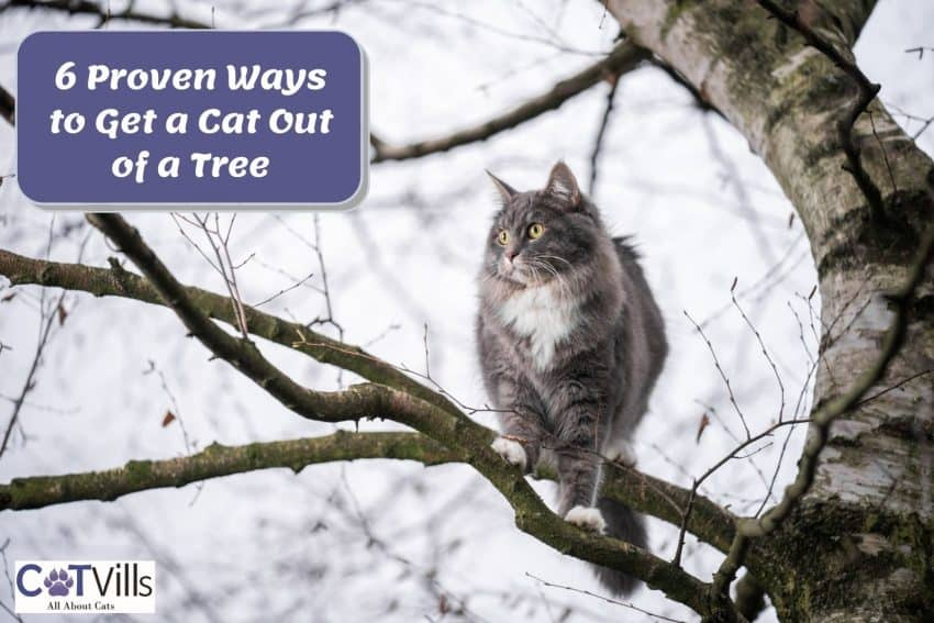 cat stuck in a tall tree but How to get a cat out of a tree?