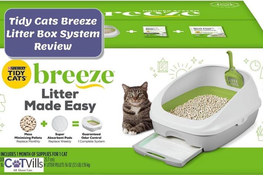 cute cat beside the Tidy Cats breeze litter box
