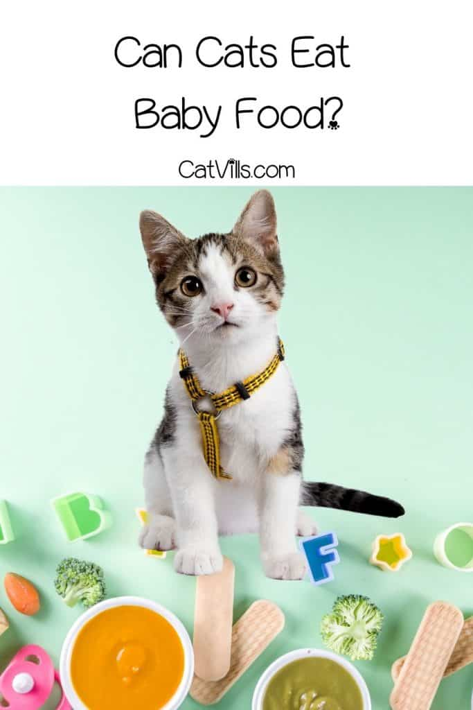 a cute kitten with baby foods