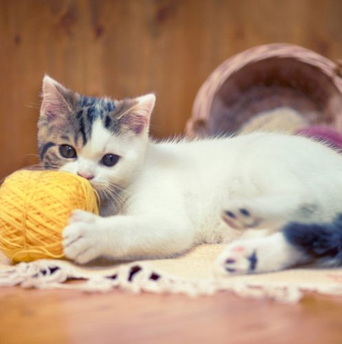 a cute kitten playing with a yellow yarn