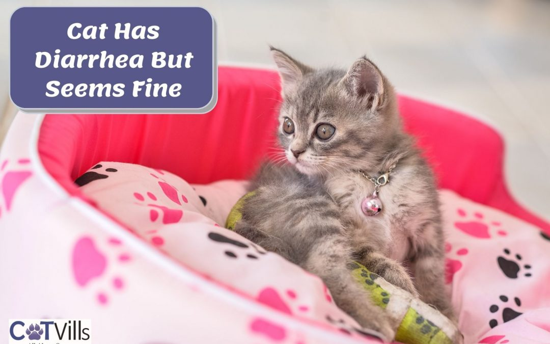 My Cat Has Diarrhea and Vomiting: What Should I do?