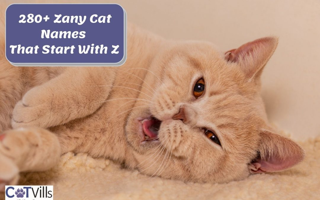 """280+ Enchanting Names for Cats That Start With """"Z"""""""