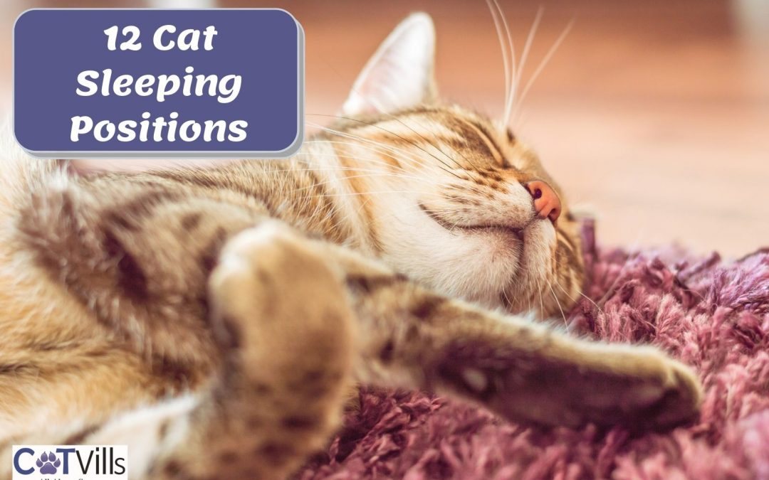 12 Cute Cat Sleeping Positions [What They Mean]