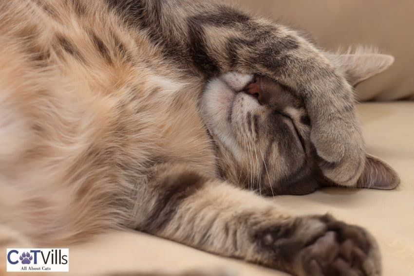 cat hiding her face with her paw while sleeping