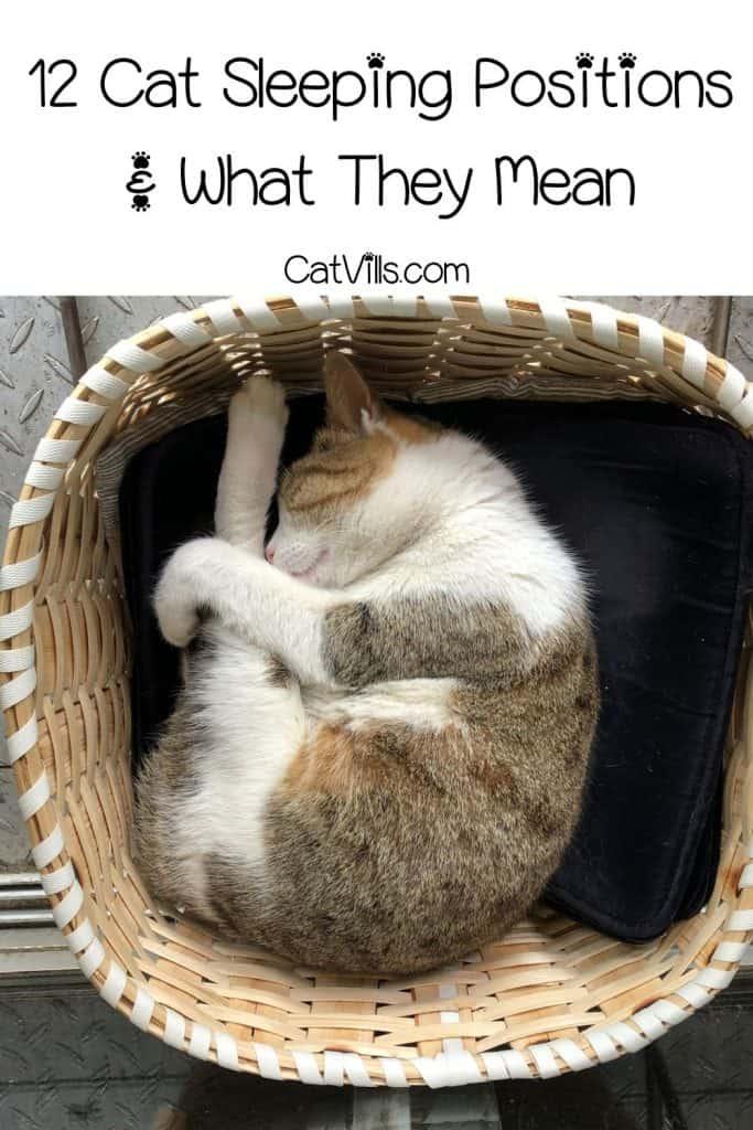 cat sleeping inside a wooden basket