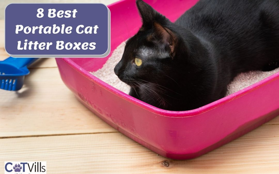 Top 8 Portable Litter Boxes for Cats in 2021