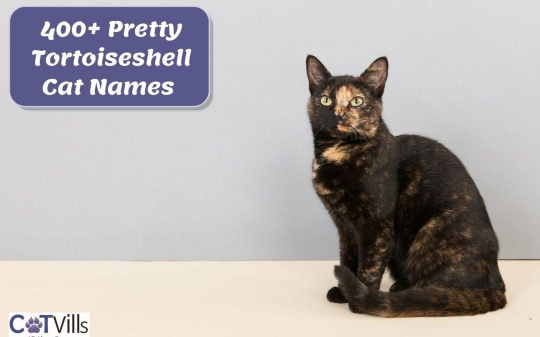 400+ Wonderful Names for Tortoiseshell Cats