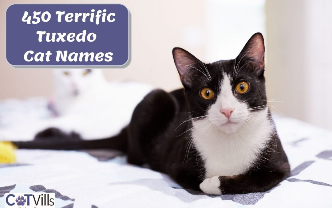 Tuxedo Cat Names: 450 Options for Males & Females