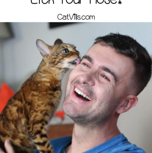 man holding his cat licking his face