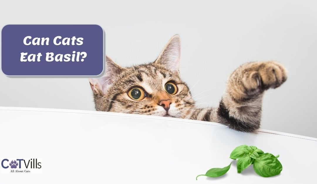 Is Basil Safe for Cats to Eat?